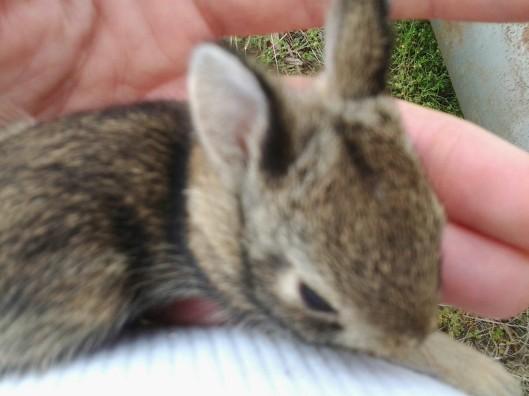 Baby rabbitt